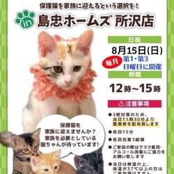 8月15日(日)島忠ホームズ所沢店譲渡会!