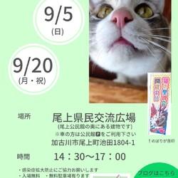 ごんまるキャット猫の譲渡会 サムネイル1
