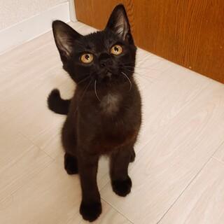 甘えん坊な黒猫❤︎カナちゃん