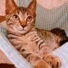 ゆめたん❤︎人も猫も大好きな女の子 サムネイル2