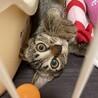 ゆめたん❤︎人も猫も大好きな女の子 サムネイル3