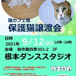 9/12(日)柏市 猫カフェ風保護猫譲渡会