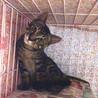 ビビリのキジトラ★レオンくん4ヵ月 サムネイル2