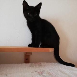 尻尾まっすぐ、綺麗な黒猫クロミちゃん