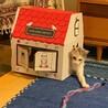 【ビータ】猫が大好きなお転婆三毛ちゃん サムネイル3