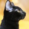 ゴロゴロと抱っこをせがむ超甘えん坊♡黒猫フウちゃん サムネイル2