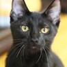 ゴロゴロと抱っこをせがむ超甘えん坊♡黒猫フウちゃん サムネイル4