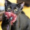 ゴロゴロと抱っこをせがむ超甘えん坊♡黒猫フウちゃん サムネイル5