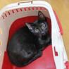 ゴロゴロと抱っこをせがむ超甘えん坊♡黒猫フウちゃん サムネイル6