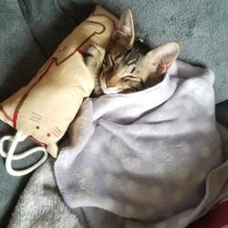 初めての猫飼育、とても甘えん坊