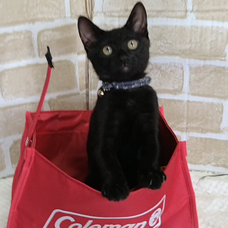 愛嬌たっぷり、やんちゃな黒猫
