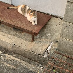 居着いた野良猫
