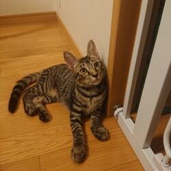 中止決定【要予約】子猫の譲渡会 サムネイル2