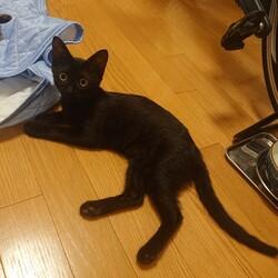 中止決定【要予約】子猫の譲渡会 サムネイル3