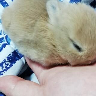 仔ウサギです。