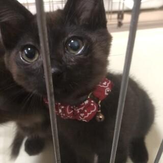 保護子猫2匹の里親募集(黒丸くん、錆丸くん)