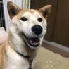 富士額美人の柴犬ランちゃん♡