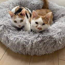 兄妹猫ちゃん保護