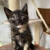 【小平市】おチビなサビ猫!ミルクちゃん