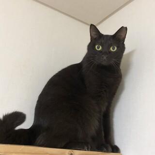 黒猫♀ちょこら
