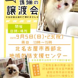【中止】保護猫の譲渡会