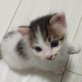 ふわふわ毛の美猫さん(一時停止します)