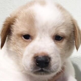 保護犬ナンバーD1513 中型犬ミックス子犬♂
