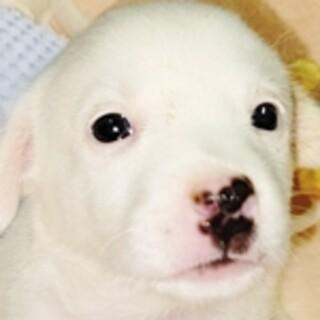 保護犬ナンバーD1516 中型犬ミックス子犬♀