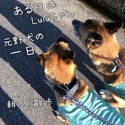 Luluちゃんにみる、元野犬の一日