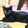 海辺で育った黒猫さん。甘えんぼな男前♡海くん