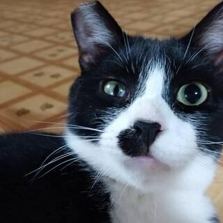 多頭飼いファミリーより、一番人懐こい猫です