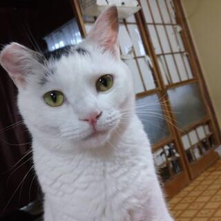 多頭飼いファミリーより、2番目に人懐こい猫です