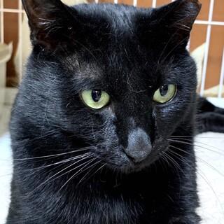 【ウニクロ】大きな体でビビりな黒猫男子