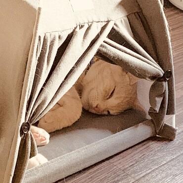 ワクチン後、テントで寝てる。お疲れ様