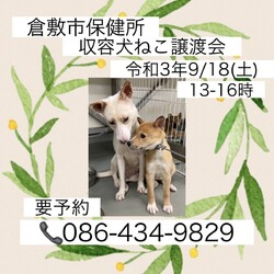 倉敷市保健所 収容犬猫譲渡会 サムネイル1