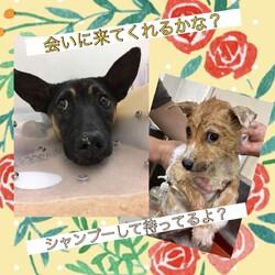 倉敷市保健所 収容犬猫譲渡会 サムネイル2