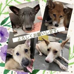 倉敷市保健所 収容犬猫譲渡会 サムネイル3