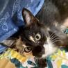 超べったり甘えん坊!個性的なミケ猫クロミちゃん
