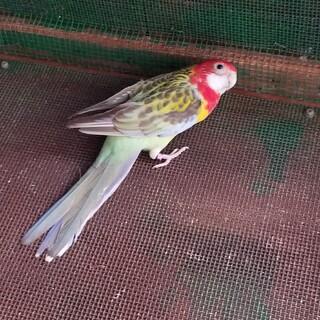 鳥をもらってください。