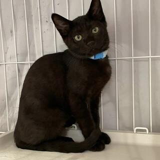 温厚なよい子♫黒猫のタンゴ