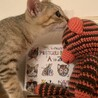 【きじ太郎】人馴れした元気っ子のキジトラ子猫 サムネイル4