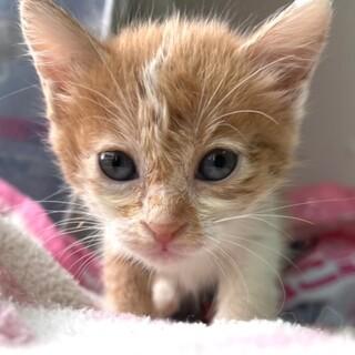 cat-W1081 小さな小さな子猫ちゃん♪