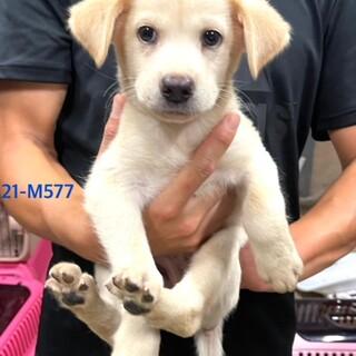 21-M577 2ヶ月の仔犬ちゃん♪