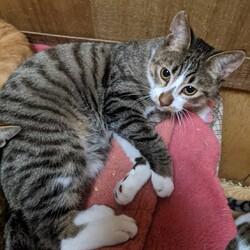 FIP(猫伝染性腹膜炎)から生還したジュミくん♂