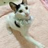 多頭向き♪甘えん坊おっとり子猫『ビスコ』3ヶ月半 サムネイル2