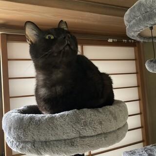 黒猫スリゴロちゃん♡子供や初対面○性格最高です!