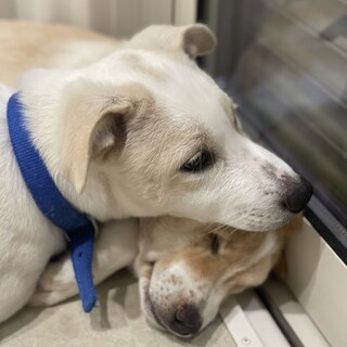 【MIX♂】保護犬の子どもたち③