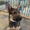 センターよりレスキューしたお母さんが産んだ子犬 サムネイル3