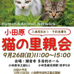 保護猫の里親会@小田原【入場枠満了】