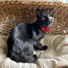 募集は停止します・ 愛らしい黒猫女子